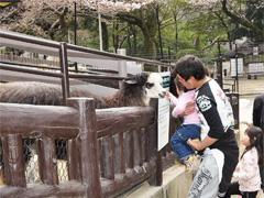 池田市 五月山動物園
