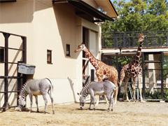 京都市 京都市動物園