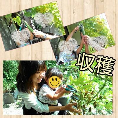 ☆お庭の野菜を収穫し家族が喜ぶ一品に☆