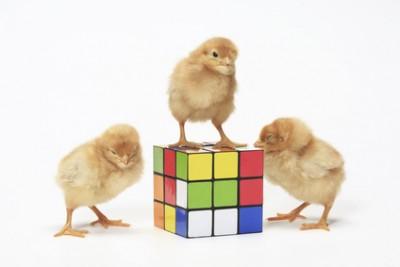 ルービックキューブで算数力アップ!?