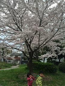 春★桜とお花見とイースター★そして‥新学期!!