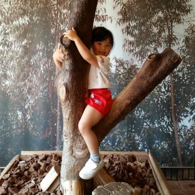 【動画】活発なコアラに会えたよ!親子遠足@王子動物園