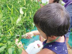 平塚市  神奈川県立花と緑のふれあいセンター  花菜ガーデン