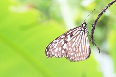 夏休み自由研究 | 課題づくりなら足立区生物園へ!