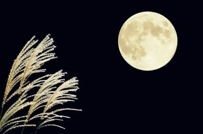 びっくり!【お月見】は3回ある&月を見て泣く娘。さて今年のお月見いつ?