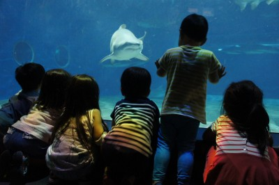 保育園友達と「サメの種類数日本一」の水族館へ!★お出かけ★