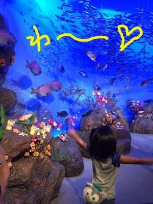 初めての新江ノ島水族館(^^)/ 混雑状況とイルカショーの観覧席位置