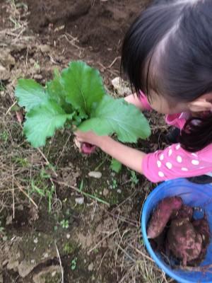 収穫の秋☆野菜の収穫体験に行ってきました