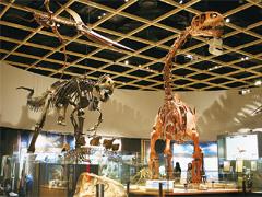 愛知県豊橋市 豊橋市自然史博物館
