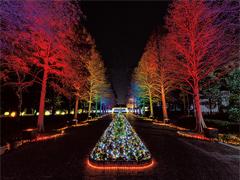 大阪市 長居植物園ガーデン イルミネーション2016 ~光の森~