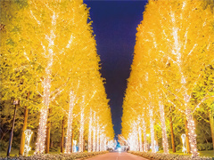 京都市 ROHM ILLUMINATION 2016