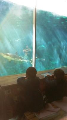 アクアイルミナージュ中☆須磨水族園のイベント&ランチ&最寄りの展望風呂