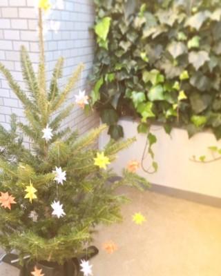 憧れのIKEAの生木のクリスマスツリー!ベランダに飾って問題解決♪