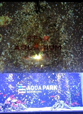 クリスマス仕様の水族館!Star Aquarium @品川アクアパーク
