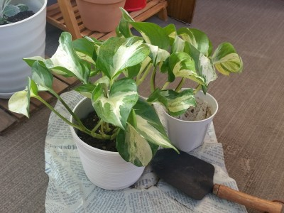 ガーデニング初心者が育てられる植物