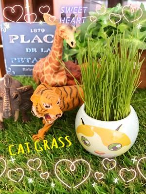 Cat's Grassのその後〜〜⭐︎