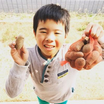 家庭菜園でジャガイモに挑戦!