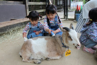 【おでかけ】GWは公園で遊ぼう!智光山公園で動物・植物とふれあう♪