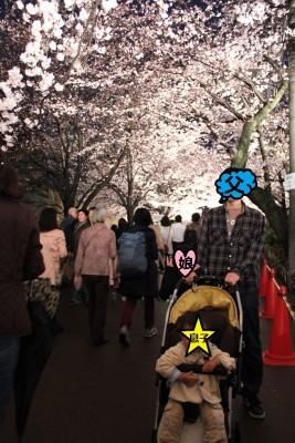 【イベント】神戸名物!動物園で夜桜ライトアップ☆