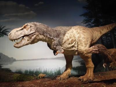 年パスがお得!恐竜や水族館も!夏は水遊びも出来ちゃう♪茨城県自然博物館