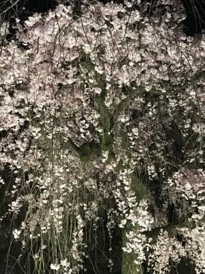 ママだって一人旅したい!日帰り&一人で桜の京都旅行の巻(後編)