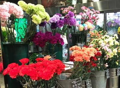 【行事】母の日はカーネーション♪気をつけて!色によって花言葉が違う!?