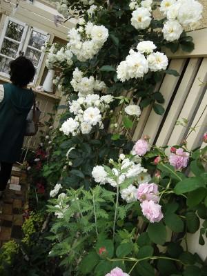 ご近所メイトと流山オープンガーデン☆バラがたくさんの江戸川台エリアへ!