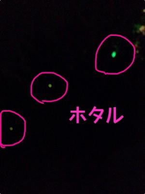 【イベント開催中・大阪】都会のド真ん中で!ホタル観賞☆
