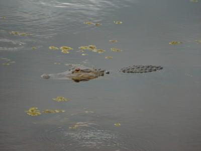 夏休み子連れサバンナ観光旅行、郊外おすすめ見どころ/サバンナ国立野生動物保護区