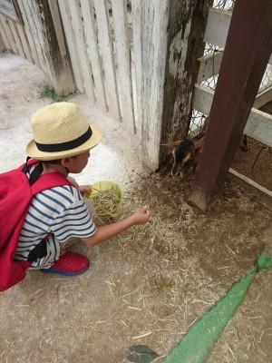 搾りたてミルクの絶品ソフトクリーム&ピザ♪成田ゆめ牧場で酪農体験!