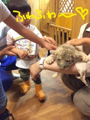 富士サファリパークでライオンの赤ちゃんと写真撮影♪お得な入園割引アリ♪