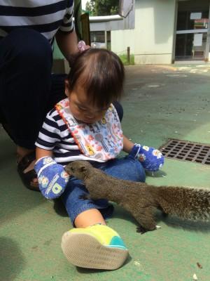 【おでかけ】リスに餌やり♪町田リス園はリス放し飼い!