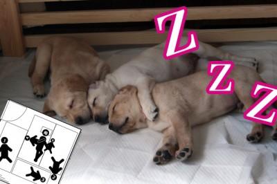 【イラスト解説】ヒドい寝相ランキング*子供と一緒に寝る親の悩みと現実
