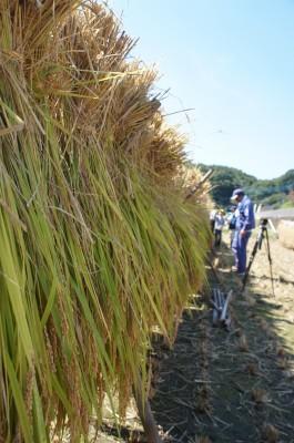 初めての稲刈り体験!~茨城県城里町へ行ってきました~