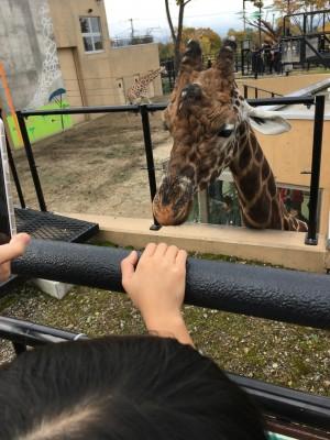 北海道おでかけレポ♪あさひやま動物園へいってきました!その2