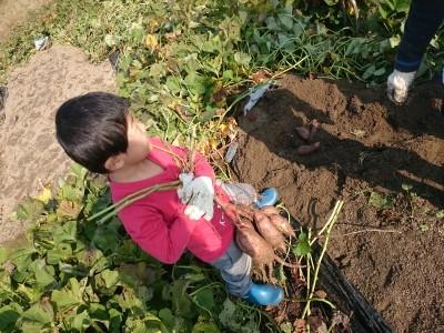 食育!苗植えからお芋掘りまで