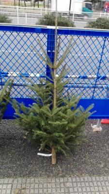 2017年もみの木情報。IKEAに行ってきた!格安でツリーを買う裏ワザ