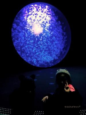世界一のクラゲ展示で有名な山形県にあるクラゲドリーム館へ