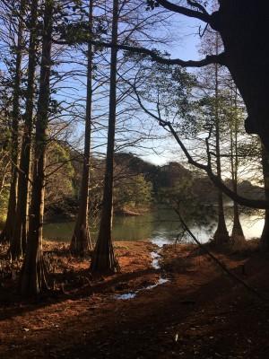 Instagramで話題の篠栗九大の森へ