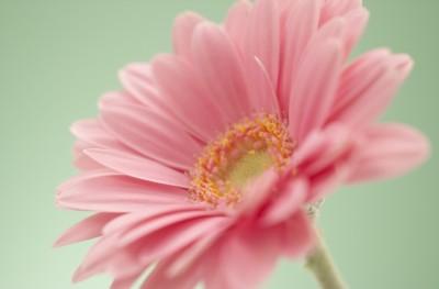 一つだけの花