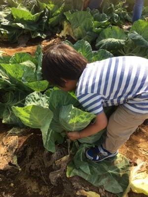 親子で楽しむお出かけ情報!入場無料のソレイユの丘で野菜収穫体験