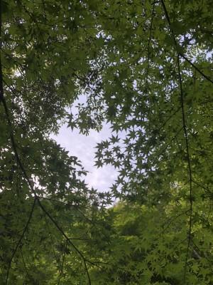 青い紅葉が美しい!新緑の箕面公園をぶらり散策。※滝道復旧工事継続中