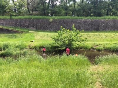 子供と楽しむ初夏のお出掛け、家族で川遊び。東京都内で川遊び。