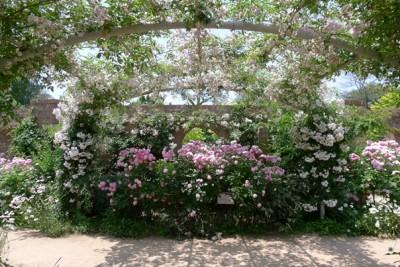 ここは夢の国?!花に囲まれる「東武トレジャーガーデン」