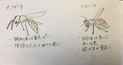 ハチが活発になる季節!東京23区、庭ナシわが家に巣を作られた!その対応