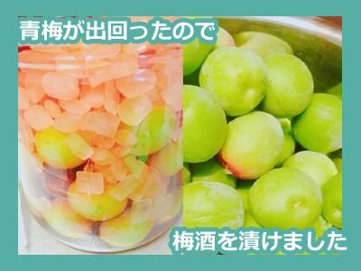 【料理】今が旬!青梅でバリエーション豊富な梅酒を漬ける