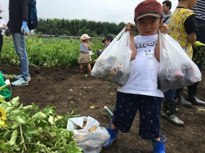 【食育活動】自分たちで植えたジャガイモ掘り!