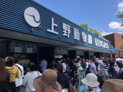 上野動物園シャンシャンを整理券なしで観覧!混雑や待ち時間と持ち物に注意