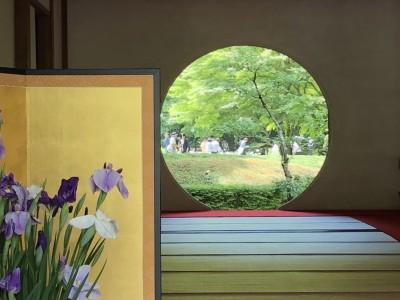 鎌倉の紫陽花は今が見ごろ!明月院と長谷寺は朝から混雑と整理券、待ち時間