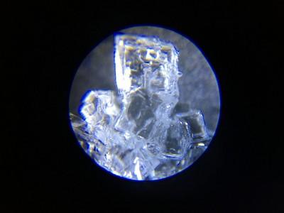 【小学生】自由研究の秘密兵器!?スマホで写真撮影できる顕微鏡が神すぎる